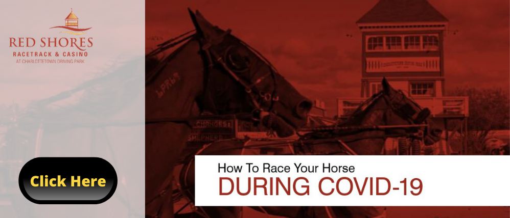 How To Race Your Horse During COVID-19